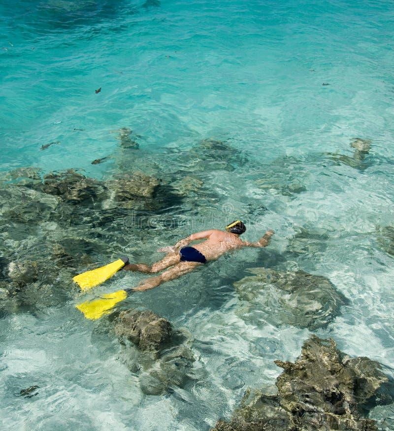 Mężczyzna snorkeling Południowy Pacyfik - Kucbarskie wyspy - fotografia royalty free