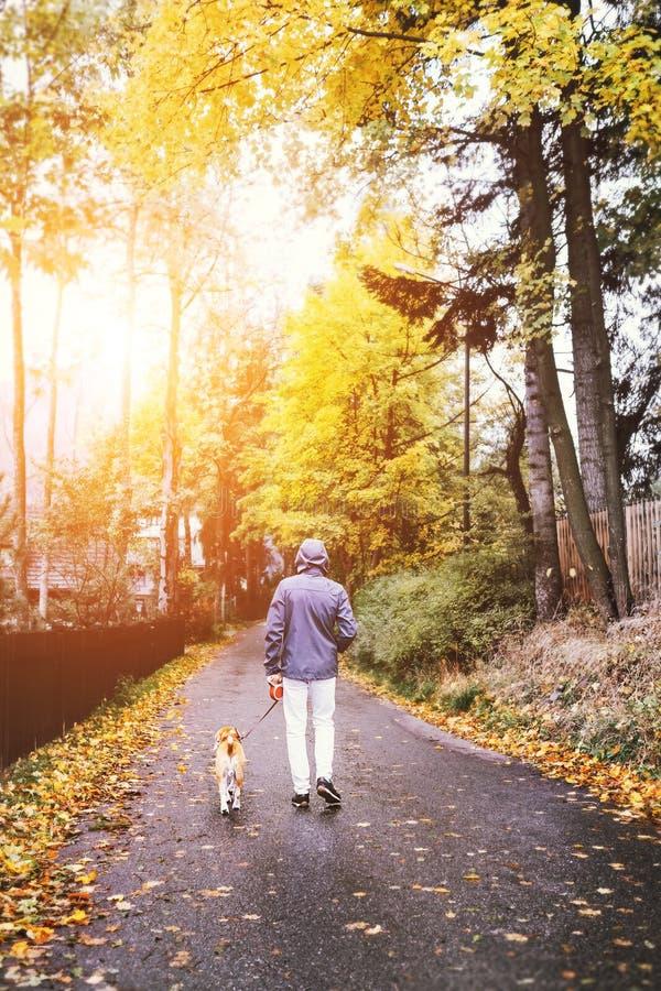 Mężczyzna spacer z psem na jesieni ulicie fotografia royalty free