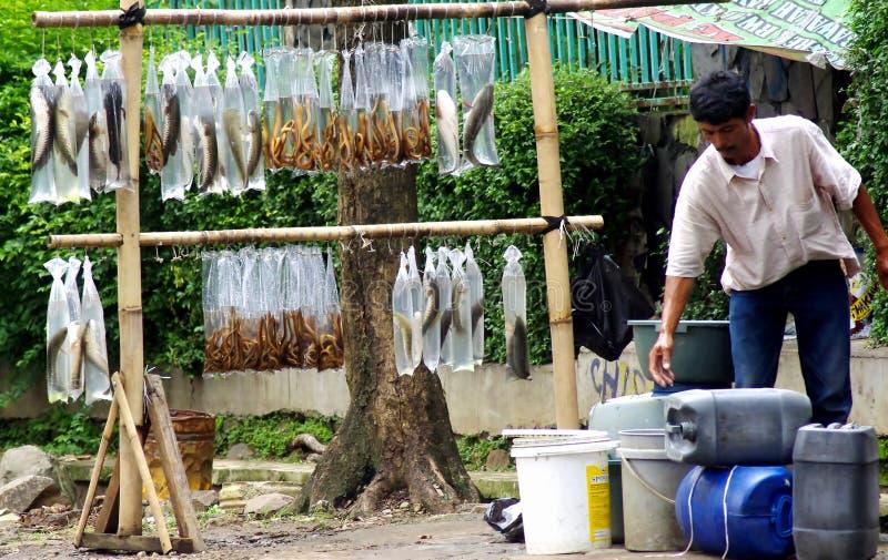 Mężczyzna sprzedawania ryba, Indonezja obrazy royalty free