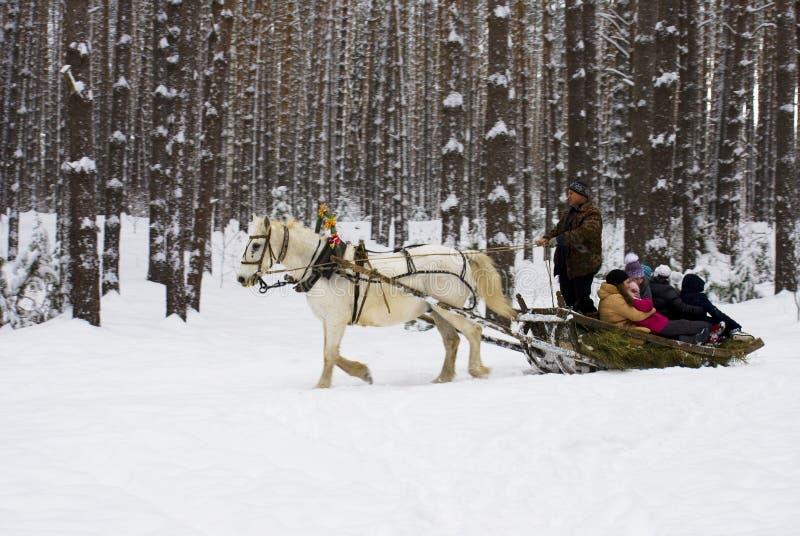 Mężczyzna stacza się dzieci na saniu w zim drewnach zdjęcie royalty free