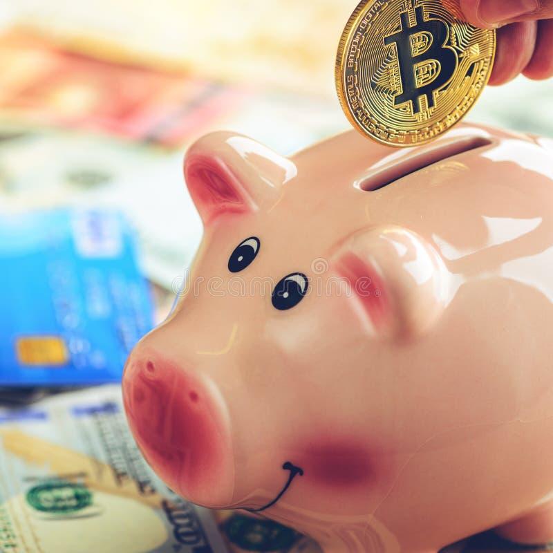 Mężczyzna stawia złotą bitcoin monetę w prosiątko banku, stonowany wizerunek Conc obrazy royalty free