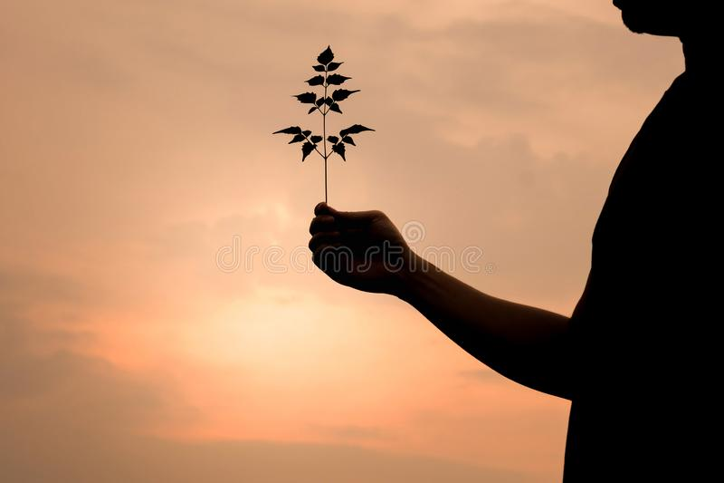 Mężczyzna sylwetka trzyma drzewa zdjęcia stock