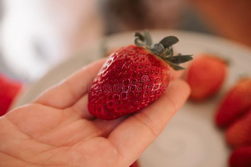 Mężczyzna trzyma świeżej truskawki zamknięta w górę widoku Organicznie owoc obrazy royalty free