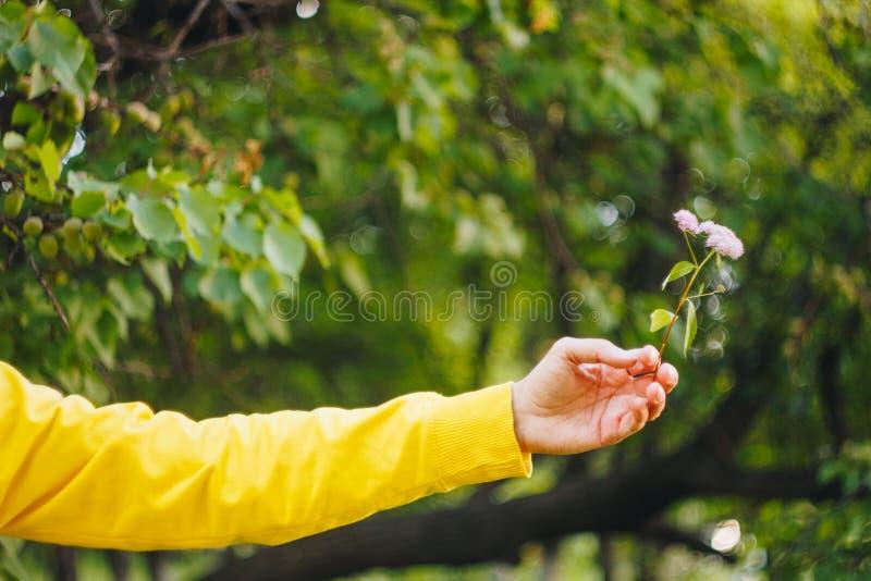 Mężczyzna trzyma kwiatu przeciw zamazanemu tłu drzewa i trawa bokeh, w górę, pinkin, lato obrazy royalty free