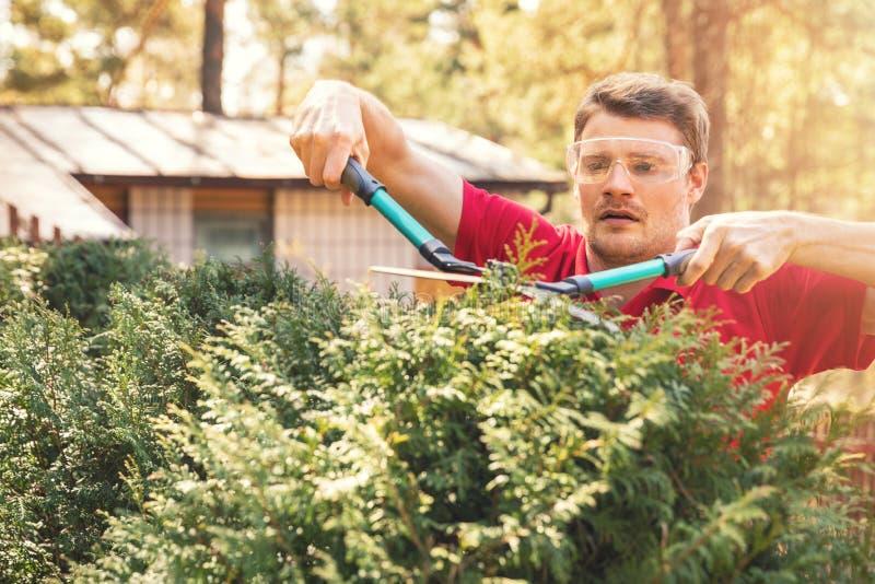 Mężczyzna tui tnący żywopłot z ogrodowymi strzyżeniami zdjęcia royalty free