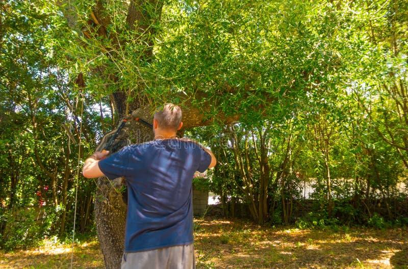 mężczyzna używa strzyżenia w ogródzie obraz stock
