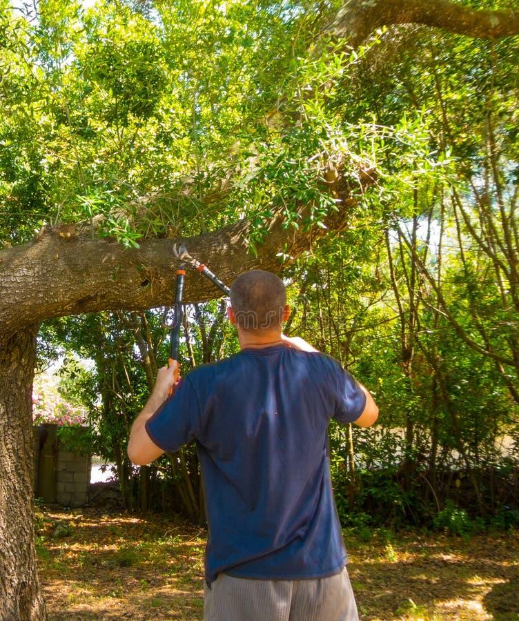 mężczyzna używa strzyżenia w ogródzie obraz royalty free