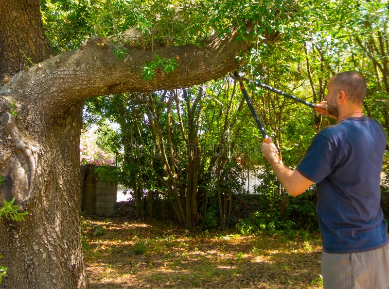 mężczyzna używa strzyżenia w ogródzie obrazy stock