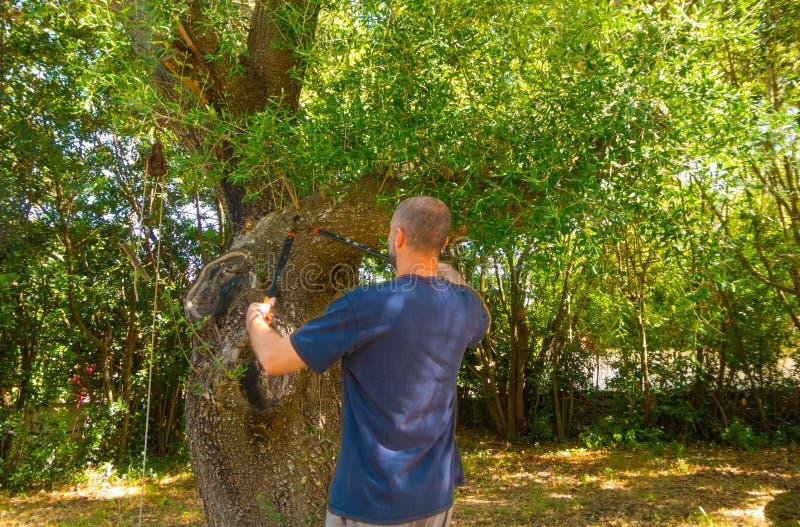 mężczyzna używa strzyżenia w ogródzie obrazy royalty free