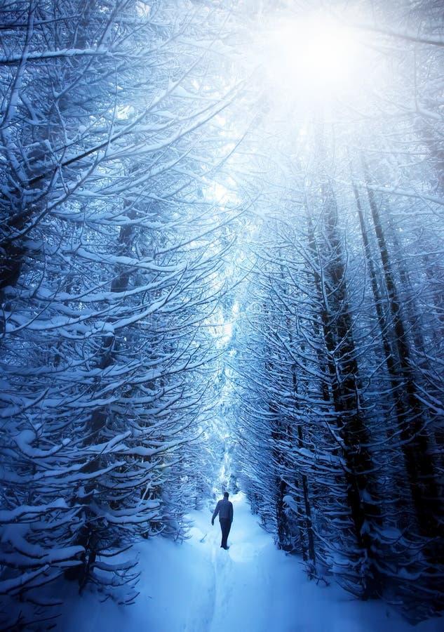 Mężczyzna w śnieżnym lesie obrazy royalty free