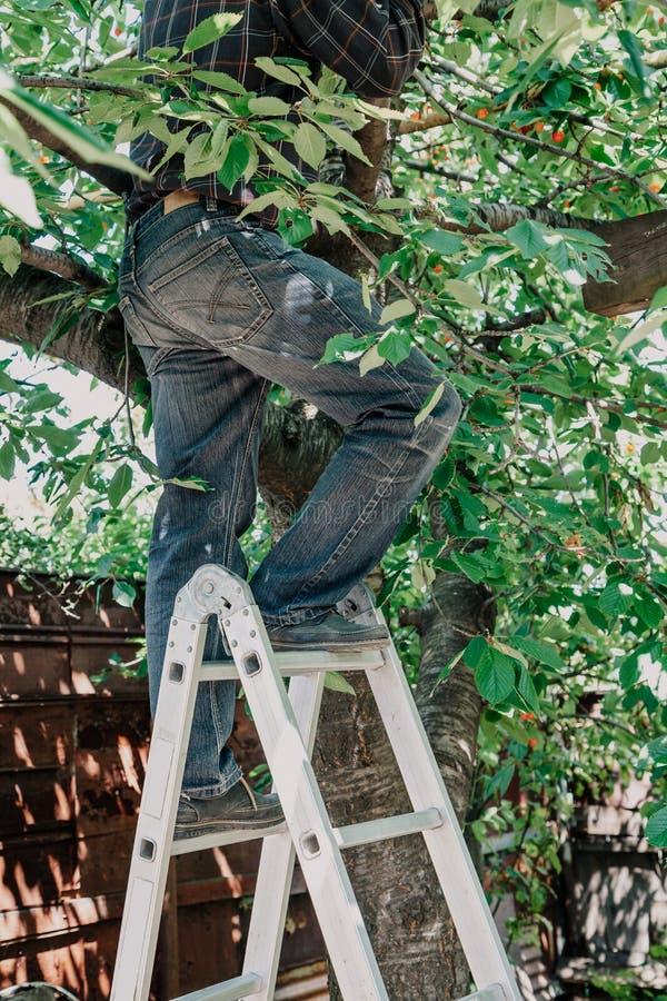 Mężczyzna w cajg wspinaczkach drzewnych od schodków obraz royalty free