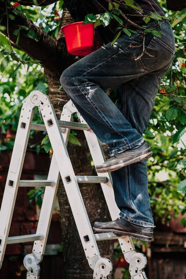 Mężczyzna w cajg wspinaczkach drzewnych od schodków zdjęcie royalty free