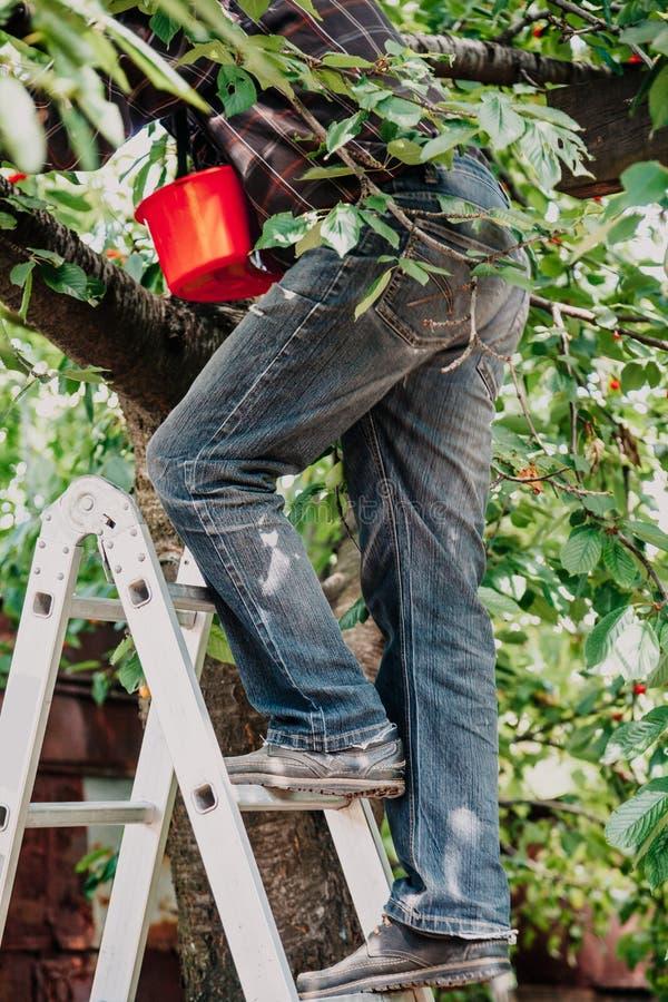 Mężczyzna w cajg wspinaczkach drzewnych od schodków obrazy royalty free