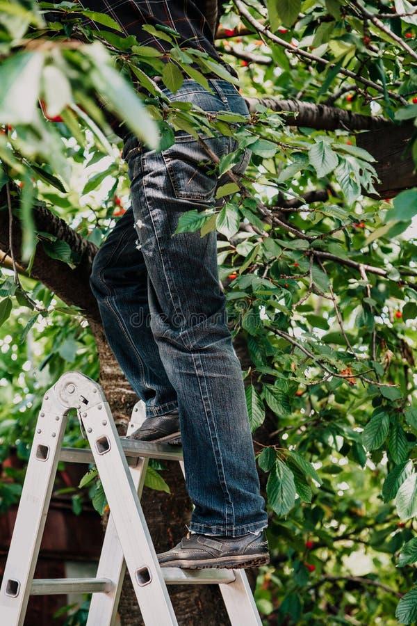 Mężczyzna w cajg wspinaczkach drzewnych od schodków fotografia stock