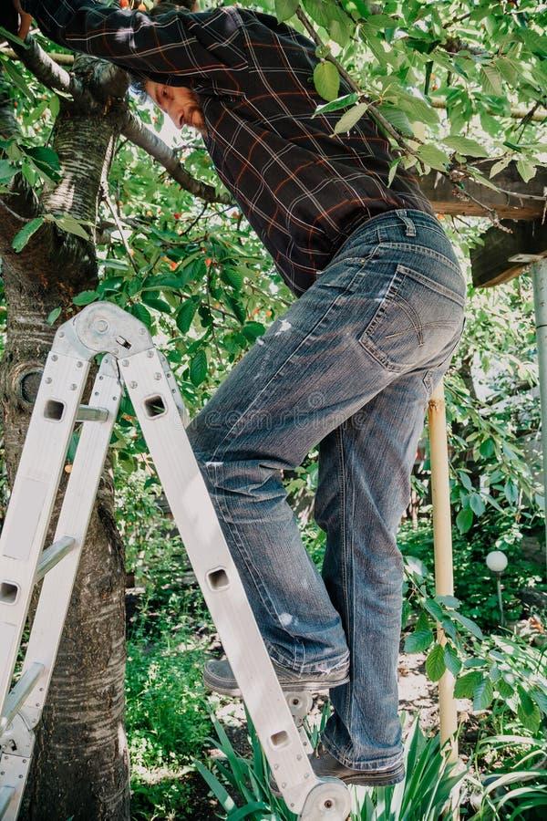 Mężczyzna w cajg wspinaczkach drzewnych od schodków obraz stock