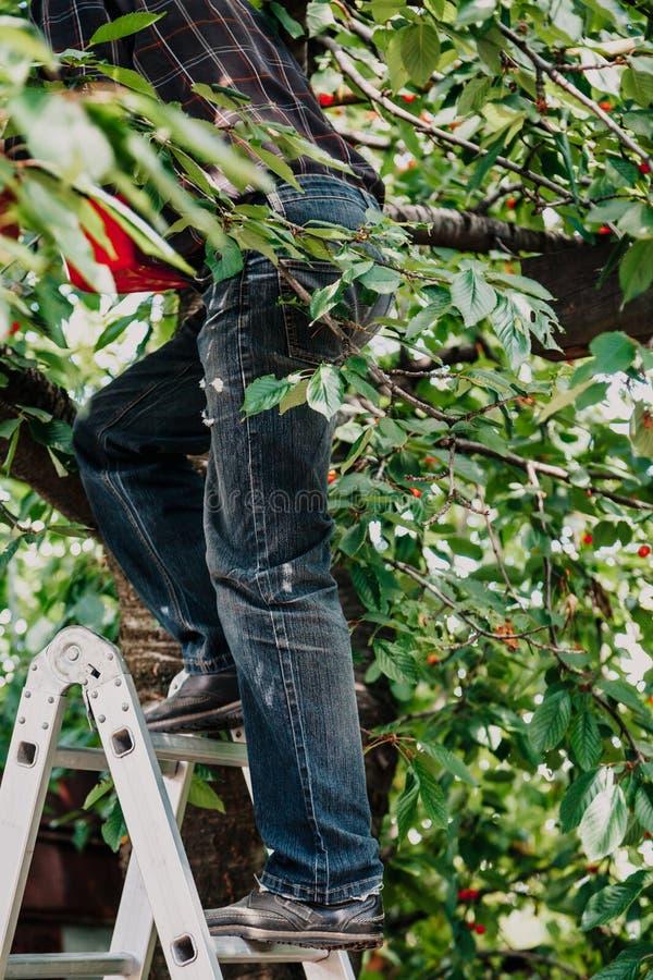Mężczyzna w cajg wspinaczkach drzewnych od schodków zdjęcia royalty free