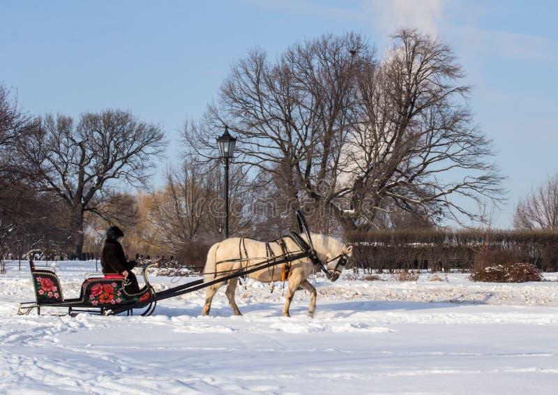 Mężczyzna w furze z białym koniem w zima parku Zima krajobrazy w Rosja obraz stock