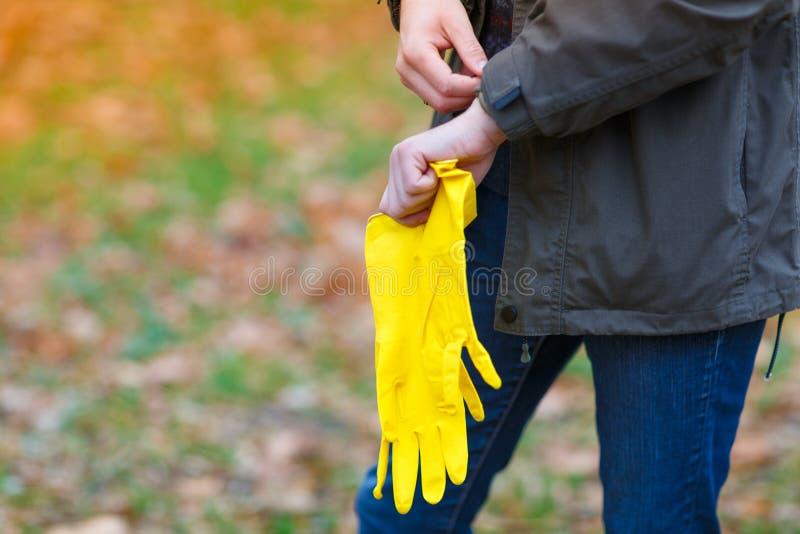 Mężczyzna w jesień parku stawia dalej gumowe rękawiczki dla zbierać liście zdjęcie royalty free