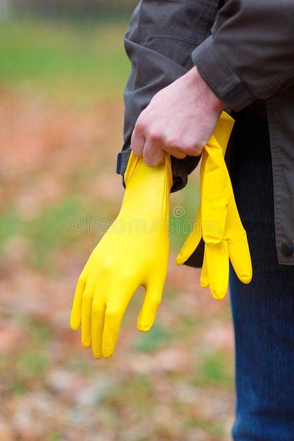 Mężczyzna w jesień parku stawia dalej gumowe rękawiczki na jego ręce dato che zbierać liście, fotografia stock