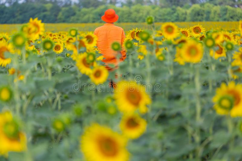 Mężczyzna w słonecznika polu zdjęcie stock