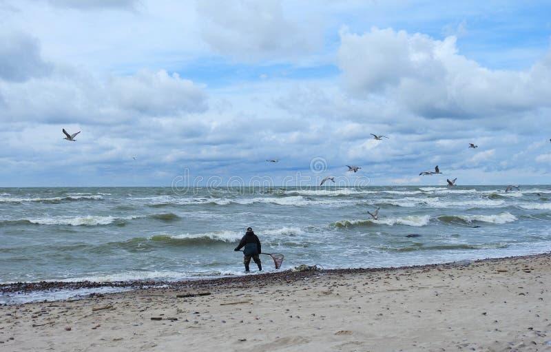 Mężczyzna wp8lywy bursztyn w morzu bałtyckim, Lithuania zdjęcie stock
