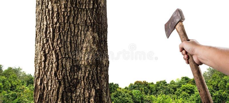 Mężczyzna z cioski ciapania drewnem obraz stock