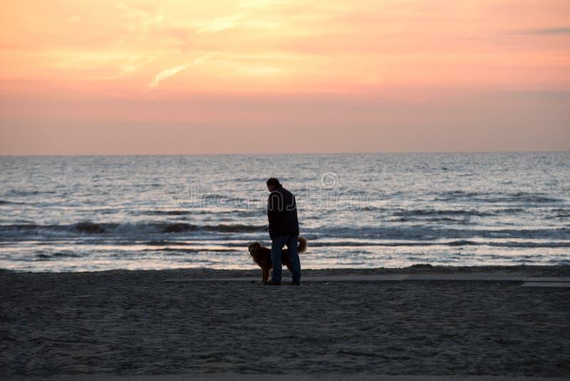 Mężczyzna z psim odprowadzeniem na plaży w Katwijk przy zmierzchem obraz royalty free