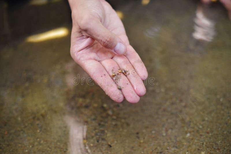Mężczyzna znajdujący złoto Współczesny szczęsliwy prospector zakłada udział złoto w zatoczce gdy panning piasek zdjęcia stock