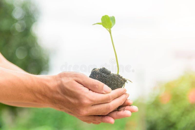 Mężczyzny chwyt sapling dla rośliny obrazy stock