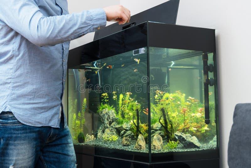 Mężczyzny karmienia ryby obraz stock