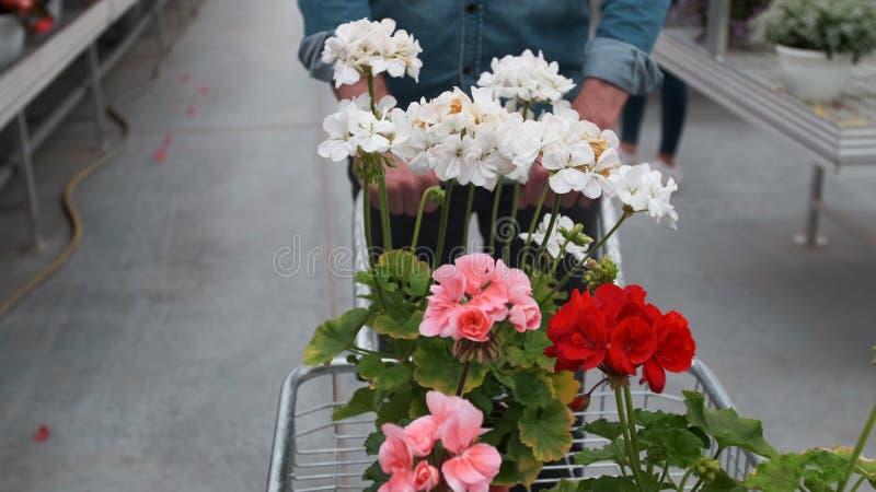 Mężczyzny kupienia kwiaty w Nasłonecznionym ogródu sklepie 4K Młodego człowieka zakupy dla dekoracyjnych rośliien na pogodnej flo obrazy royalty free