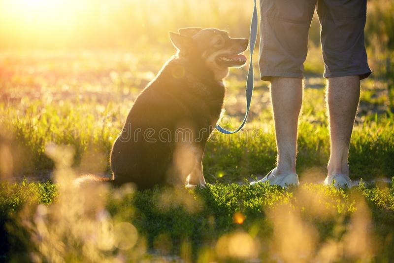 Mężczyzny odprowadzenie z psem w polu przy zmierzchem zdjęcie royalty free
