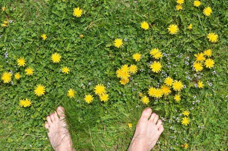 Męscy nadzy cieki, zieleni gras, żółci dandelions obraz royalty free