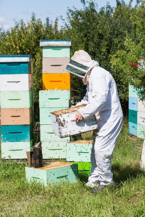 Męska pszczelarki przewożenia Honeycomb skrzynka obrazy royalty free