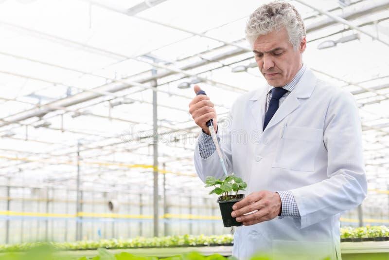 Męski biochemik używa pipetę na rozsadzie w rośliny pepinierze fotografia stock