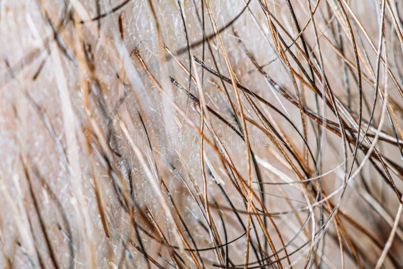 Męski broda włosy zdjęcie royalty free