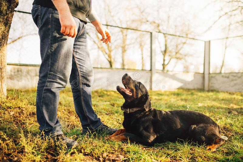 Męski cynologist z usługa psem, stażowy outside zdjęcia stock