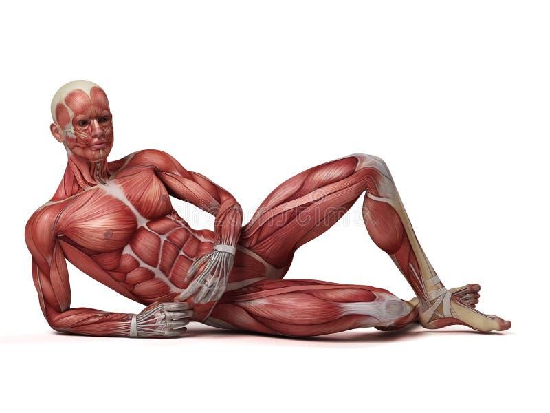 Męski mięśniowy system ilustracji