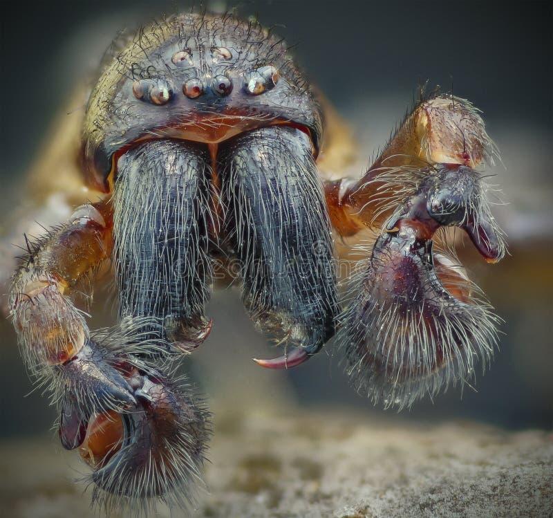 Męski pająka sztaplowania wizerunek obraz royalty free