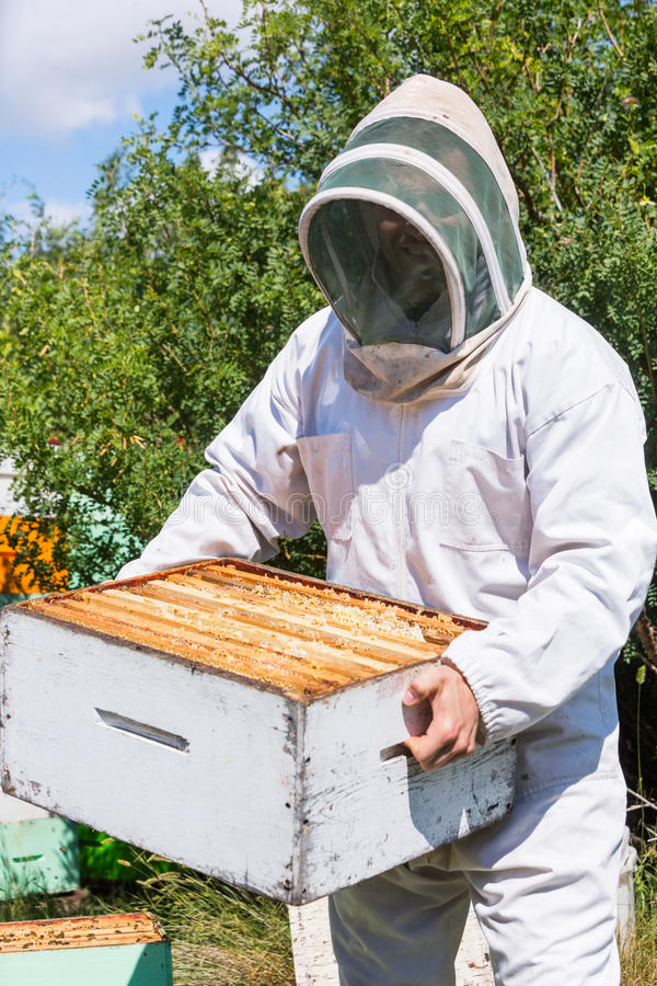 Męski pszczelarki przewożenia Honeycomb pudełko Przy pasieką obrazy stock