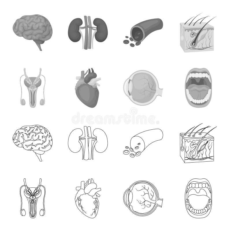 Męski system, serce, gałka oczna, oralny zagłębienie E ilustracji