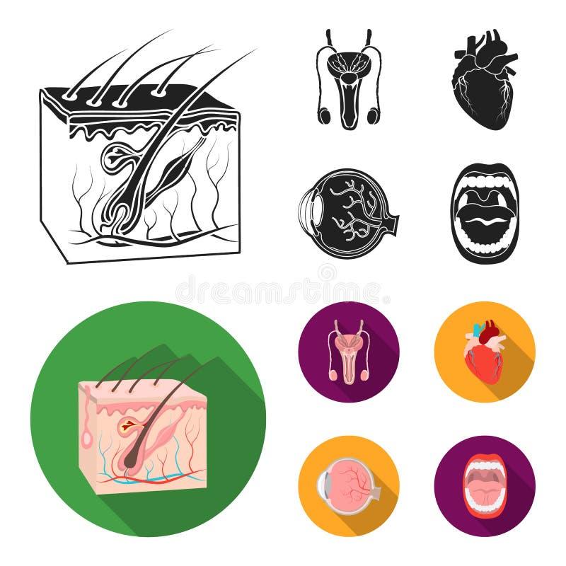 Męski system, serce, gałka oczna, oralny zagłębienie Organ ustawiać inkasowe ikony w czarnym, mieszkanie symbolu stylowy wektorow ilustracja wektor