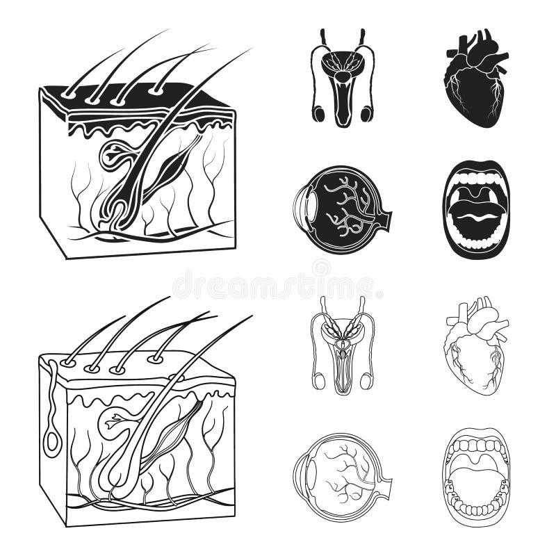 Męski system, serce, gałka oczna, oralny zagłębienie Organ ustawiać inkasowe ikony w czerni, konturu symbolu stylowy wektorowy za ilustracja wektor