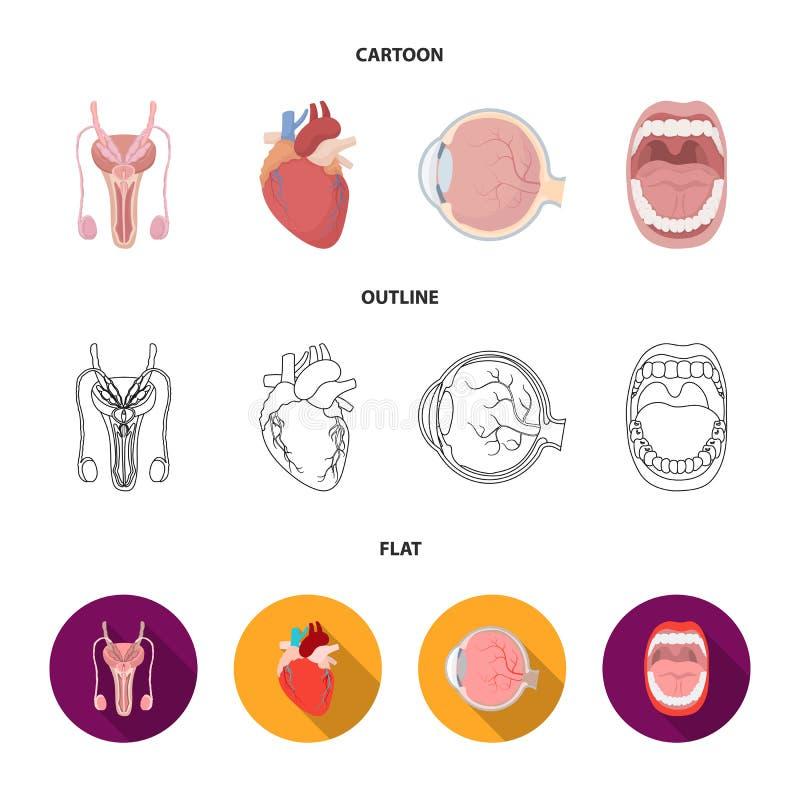Męski system, serce, gałka oczna, oralny zagłębienie Organ ustawiać inkasowe ikony w kreskówce, kontur, mieszkanie symbolu stylow ilustracja wektor