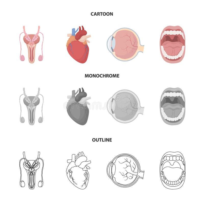 Męski system, serce, gałka oczna, oralny zagłębienie Organ ustawiać inkasowe ikony w kreskówce, kontur, monochromu stylowy wektor ilustracji
