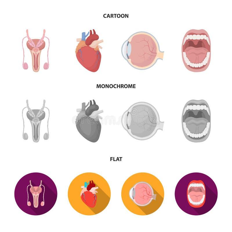Męski system, serce, gałka oczna, oralny zagłębienie Organ ustawiać inkasowe ikony w kreskówce, mieszkanie, monochromu stylowy we ilustracji