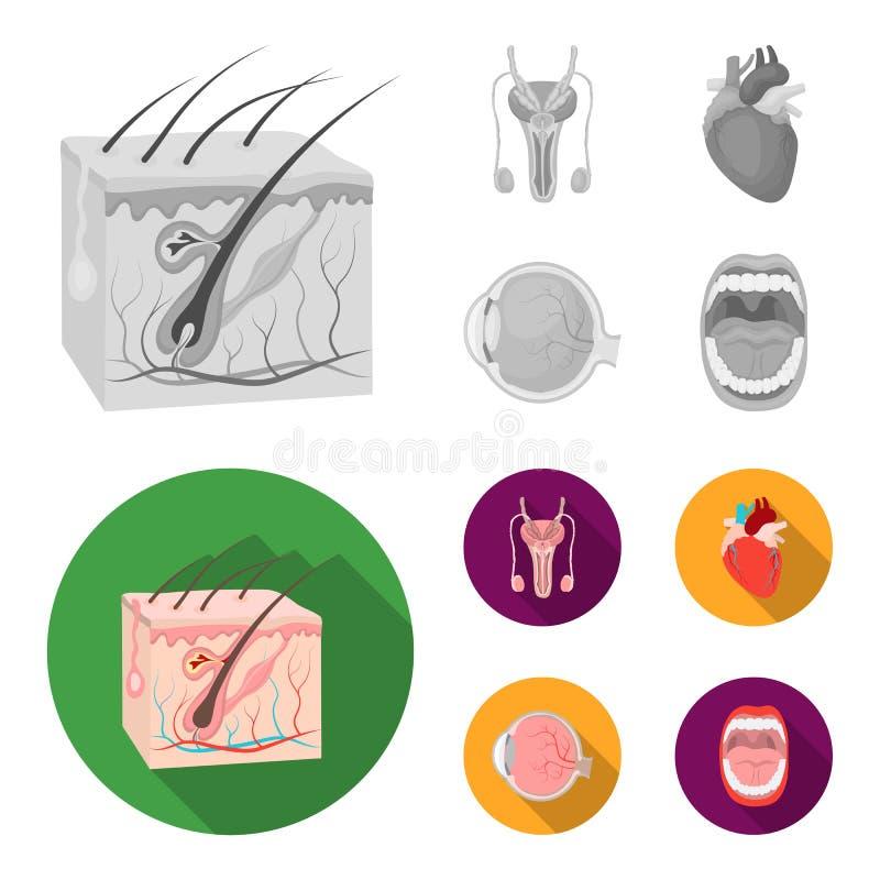 Męski system, serce, gałka oczna, oralny zagłębienie Organ ustawiać inkasowe ikony w monochromu, mieszkanie symbolu stylowy wekto ilustracji