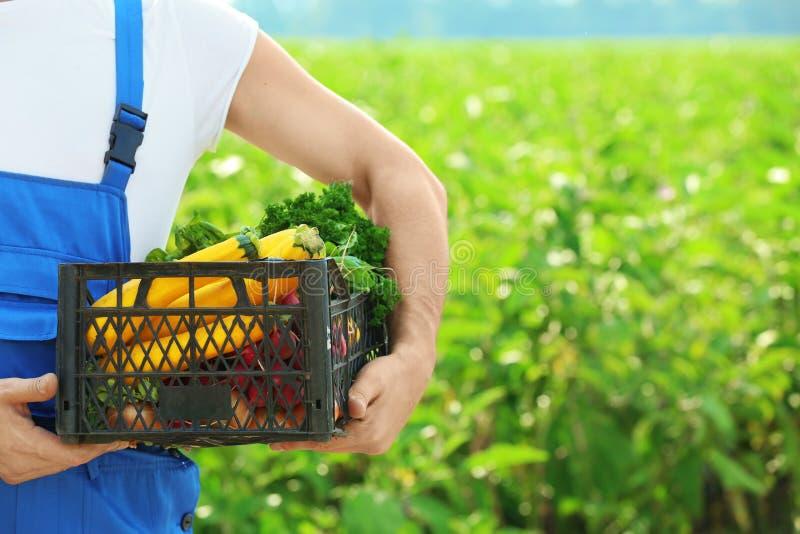 Męskiego średniorolnego mienia plastikowy pudełko z warzywami zdjęcia royalty free