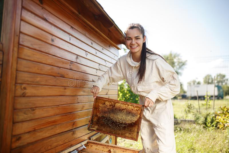 Młoda żeńska pszczelarka wyciąga od roju drewnianą ramę z honeycomb Zbiera miód Beekeeping pojęcie zdjęcia royalty free