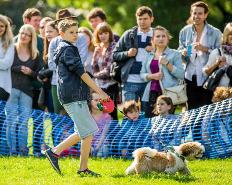 Młoda chłopiec chodzi jego psa w parku przy psim przedstawieniem fotografia royalty free